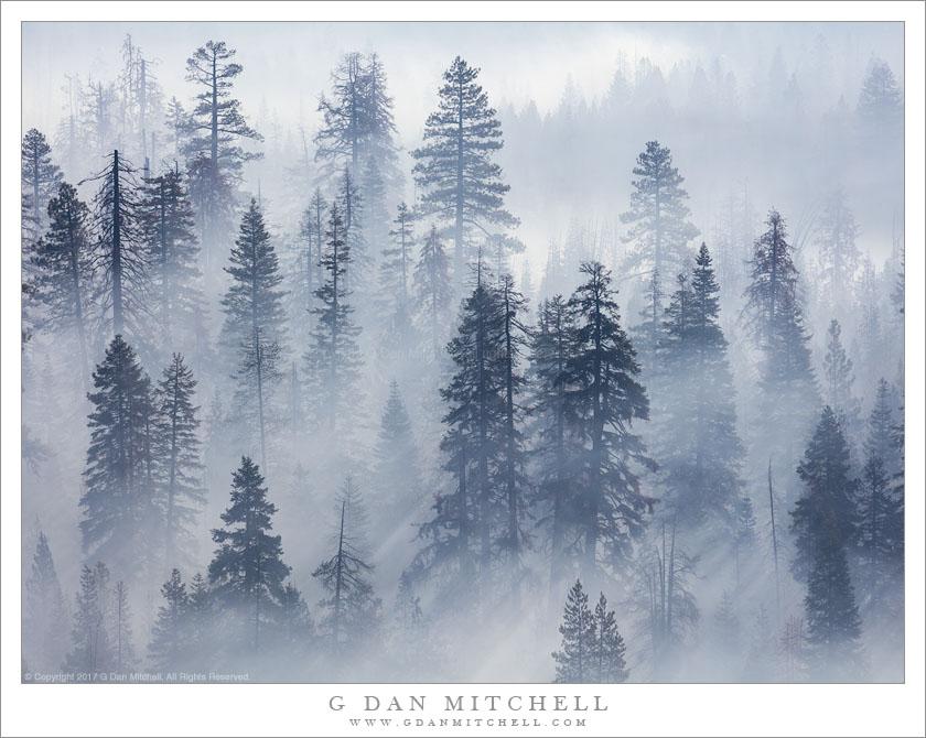 Forest, Wildfire Smoke