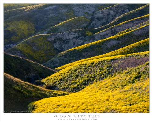 Flower-Covered Hills