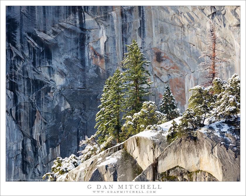 Trees, Snowy Ledge